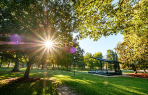 Sunlight through trees in the grove with stage in view